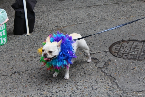 The most fabulous dog